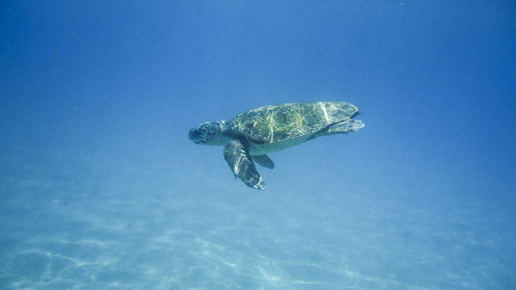 kornjaca-zakintos