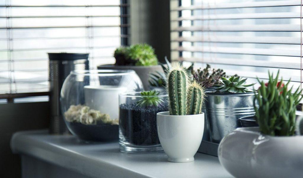biljke-saksije-uredjenje-enterijera-kaktusi