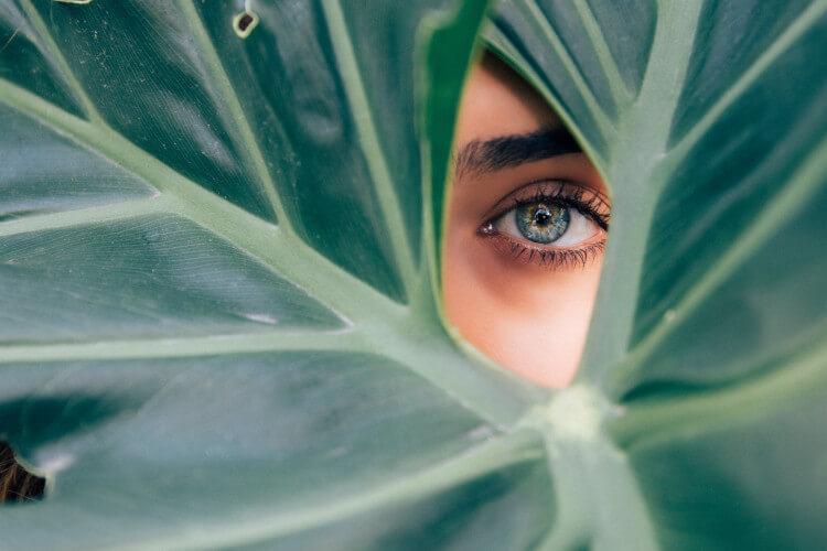 oko-zeleno-biljka